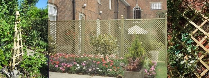 Dream of trellis and lattice work